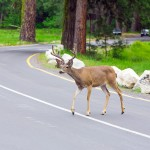 Learn how to work through the four common driving emergencies in Klamath Falls, OR