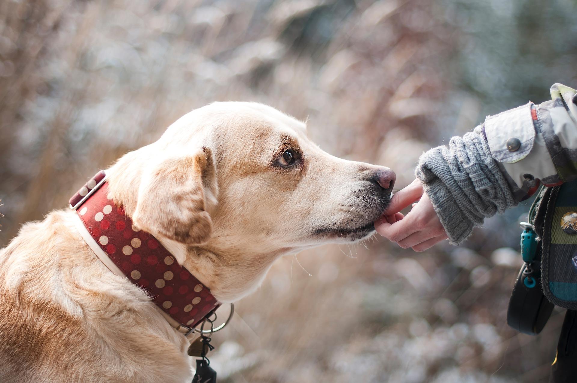Liability Insurance for Dog Bite Claims Klamath Falls, OR